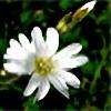 czarnaakwarelka's avatar