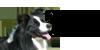 dA-KC's avatar