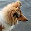 Daihj's avatar
