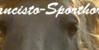 Dancisto-Sporthorse