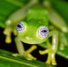 danonnota's avatar