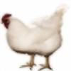 DanP2002's avatar
