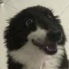 Dapper-Fool's avatar