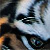 dariocotti's avatar