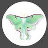DarkrescentMoon's avatar