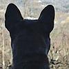 darksister8's avatar
