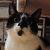 darkskyluna's avatar