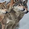 Darksnow72's avatar