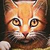 Darrycurtisfangirl's avatar
