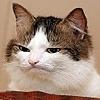 darthbren's avatar