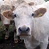 Darydith's avatar