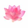 DashiUP's avatar