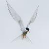 Dashka-bird's avatar