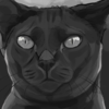 DawnOfTheGold's avatar