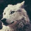 DaWolfieness's avatar