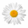 DazedDaisiesO-o's avatar
