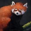 dDareNn's avatar