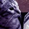 Deadman87912's avatar