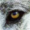 deadwolf140407's avatar