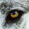 deadwolf140407's avatar