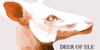 Deer-of-Ele's avatar