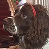 deerketchup's avatar