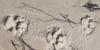 Der-Strandhund's avatar