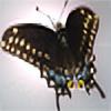 DesiaB's avatar