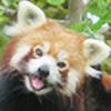 devsake's avatar