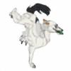 DGeva's avatar