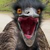 dhmanga186's avatar