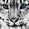 Dinahym's avatar