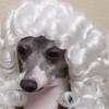 Dingo234's avatar