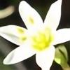dinoluvscherries92's avatar