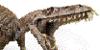 Dinosaurs-sez-RAWR's avatar