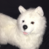 Disney1123's avatar