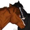 Disneyhorse's avatar