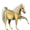 DitBenIkke's avatar