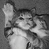 Diva15's avatar