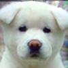 DJDesco's avatar