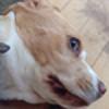 DjSfm's avatar