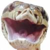 DLemr's avatar
