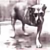 dogcanjump's avatar