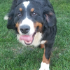 doghope343's avatar