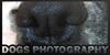 DogsPhotography