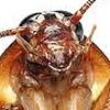 DoktorTrask's avatar