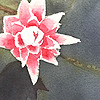 doma22's avatar
