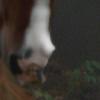 Donkeyburro's avatar