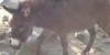 DonkeyLovers's avatar