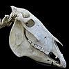 Doodles-for-Noodles2's avatar